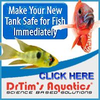Make Your New Tank Safe for Fish Immediately  One and Only from Dr.Tims Aquatics