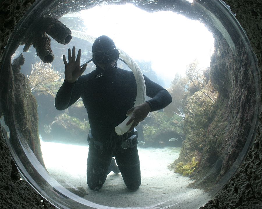 Scuba Diver Cleaning 60064