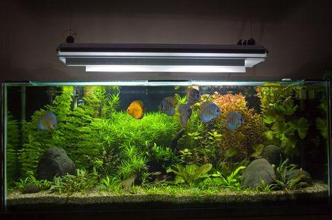 Planted tank for Night fishing light setup