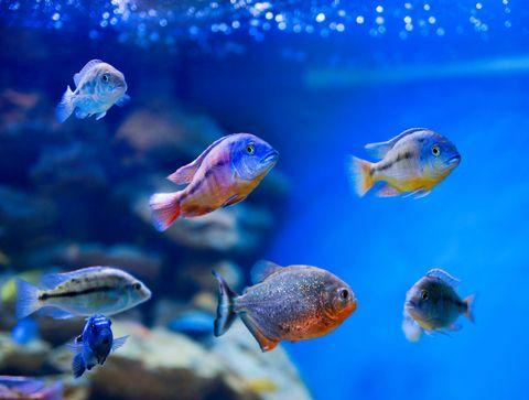 Fish diseases for Best freshwater aquarium fish combination