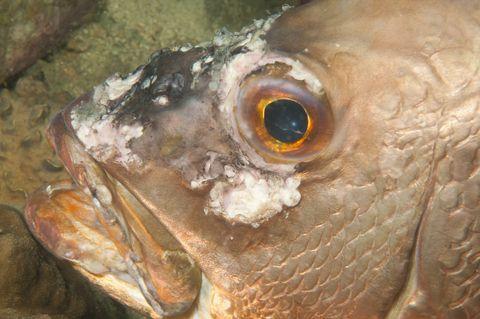 Tropical fish for Tropical fish diseases