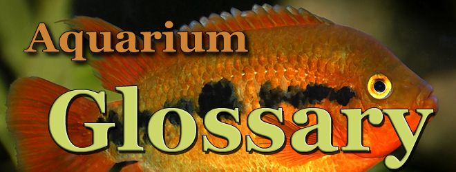 aquarium glossary copy