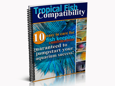 tropical fish compatibility